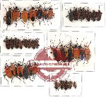 Scientific lot no. 54 Heteroptera (39 pcs A-, A2)