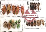 Scientific lot no. 73 Heteroptera (33 pcs)