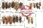 Scientific lot no. 67 Heteroptera Reduvidae (21 pcs - some A2)