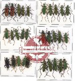 Scientific lot no. 2 Oedemeridae (30 pcs A-, A2)