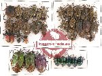 Scientific lot no. 93 Heteroptera (36 pcs A, A-, A2)