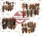 Scientific lot no. 112 Heteroptera (54 pcs)
