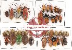 Scientific lot no. 91 Heteroptera (41 pcs)