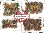 Scientific lot no. 96 Heteroptera (77 pcs)