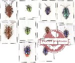 Scientific lot no. 94 Heteroptera (10 pcs A, A-, A2)