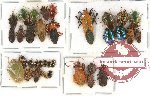 Scientific lot no. 114 Heteroptera (35 pcs)