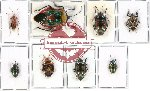 Scientific lot no. 117 Heteroptera (8 pcs - 3 pcs A2)