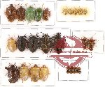 Scientific lot no. 124 Heteroptera (30 pcs A, A-, A2)