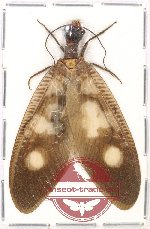 Corydalidae sp. 6 (A-)